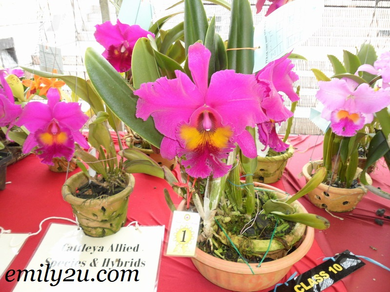 Perak Orchid Society (POS) Orchid Show
