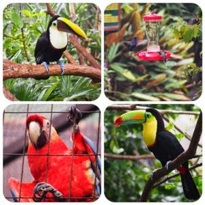 Podróże 2014: Costa Rica - La Paz Waterfall Gardens