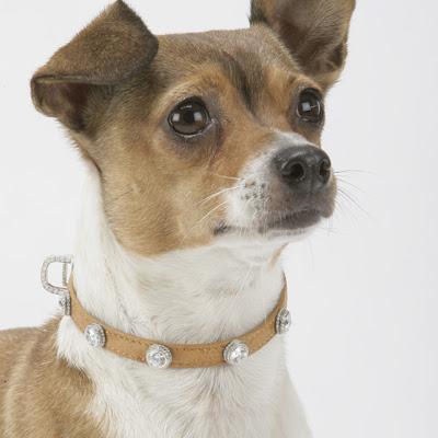 iLove Dogs Diamonds