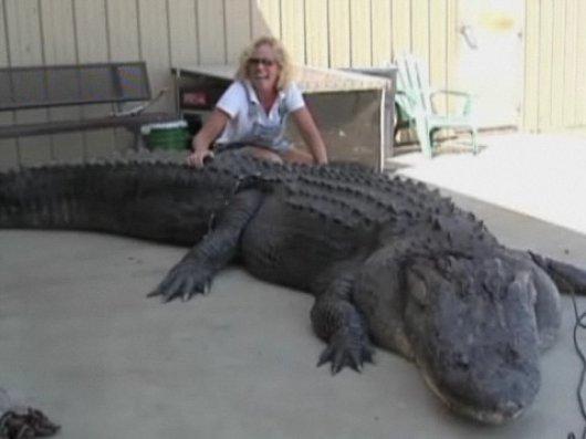Questões e Fatos sobre Crocodilianos gigantes: Transferência de debate da comunidade Conflitos Selvagens.  - Página 3 Crocodilogigante_grande