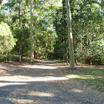 Trail on Lookout Ridge Trail in Blackbutt Reserve (399511)