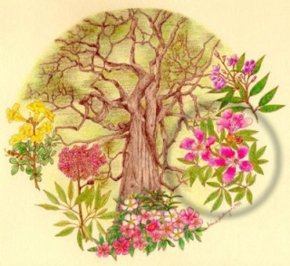 Las flores del logo Cap_arbol-banner