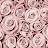 Jenna Mitchell avatar image