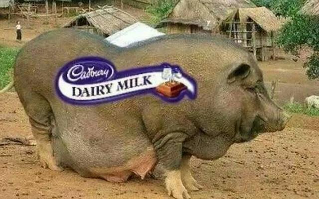 Ada Lagi Ummat Islam Makan Coklat Cadbury?