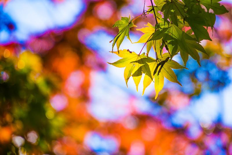 昭和記念公園 日本庭園 紅葉 写真7