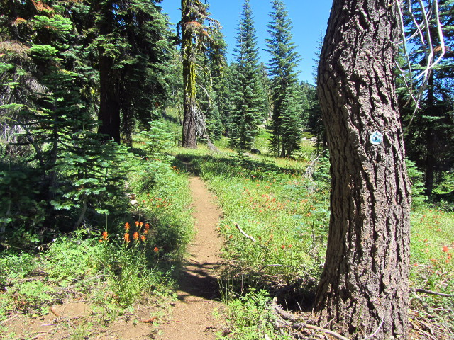 a piece of the Pacific Crest Trail