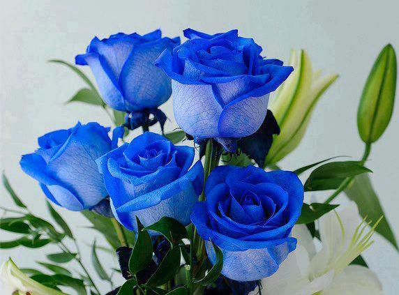 bó hoa hồng xanh đẹp tuyệt vời