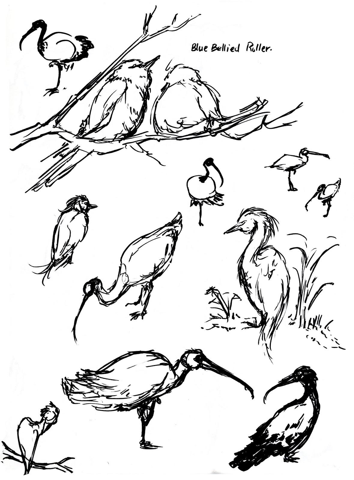 art kimistry animal drawings location oakland zoo