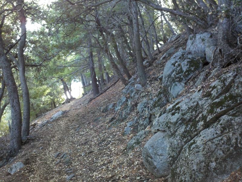 Mount Wilson • Sturtevant Trail
