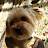 Garrett Hawke avatar image