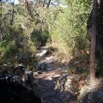 Piles Creek Loop track (177780)