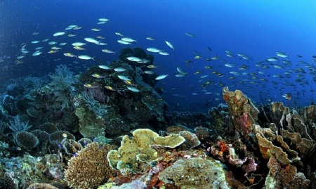 Togian Islands, Unforgettable Diving