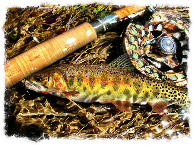 rio grande cutthroat trout