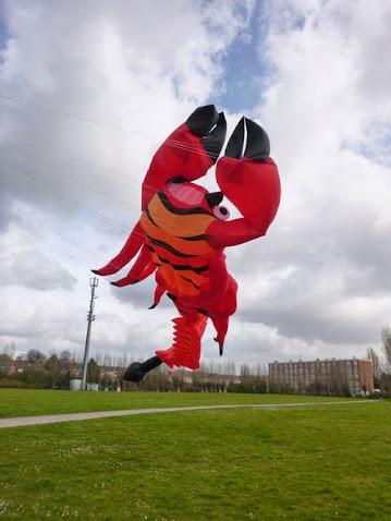 Photo du scorpion