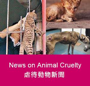 虐待動物新聞