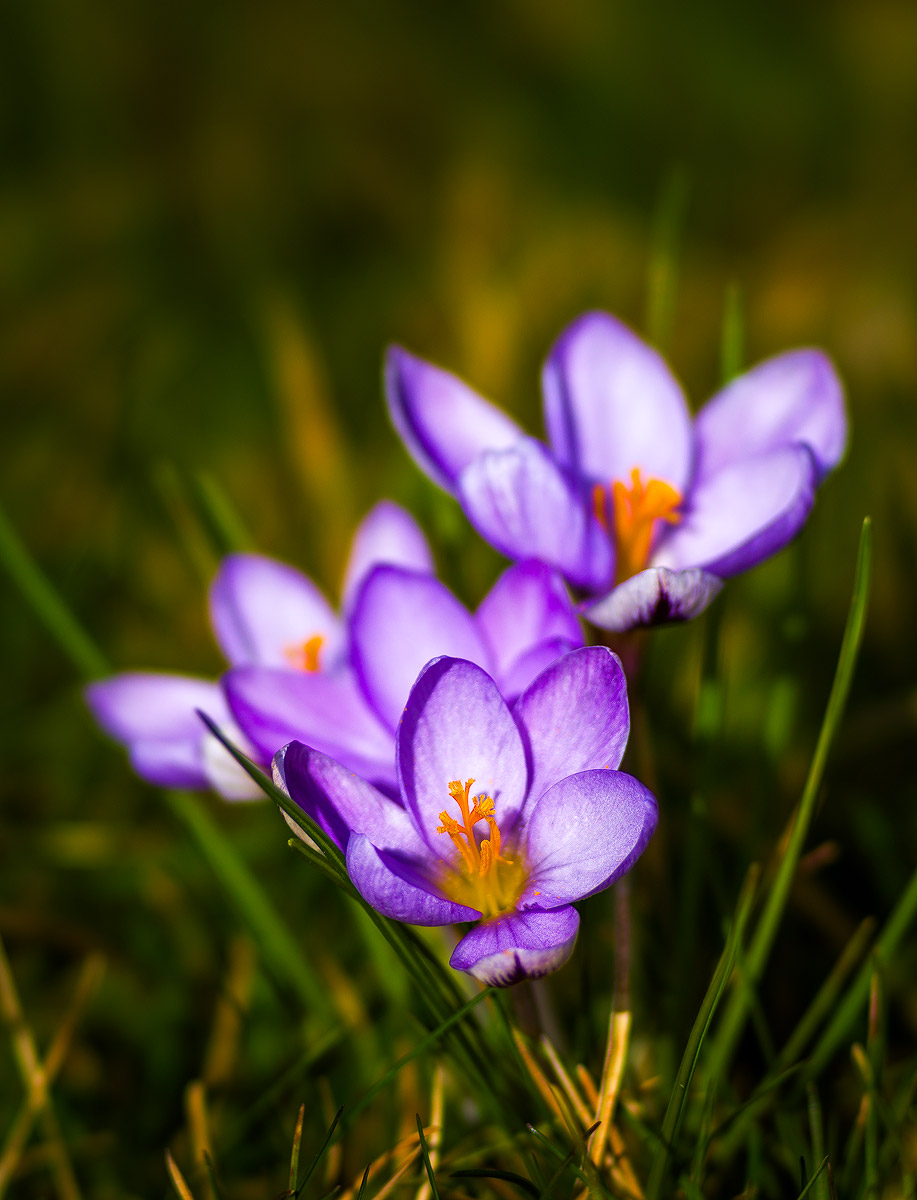 Some springs flowers just for you this weekend :) Sony A7r with Sony 135 F2.8 [T4.5]…