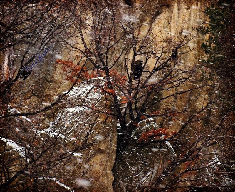 chilia dionisie muntii buzaului iarna