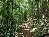 Bosque Estatal Guajataca (Guajataca State Forest)