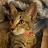 Tiramisu Tales avatar image
