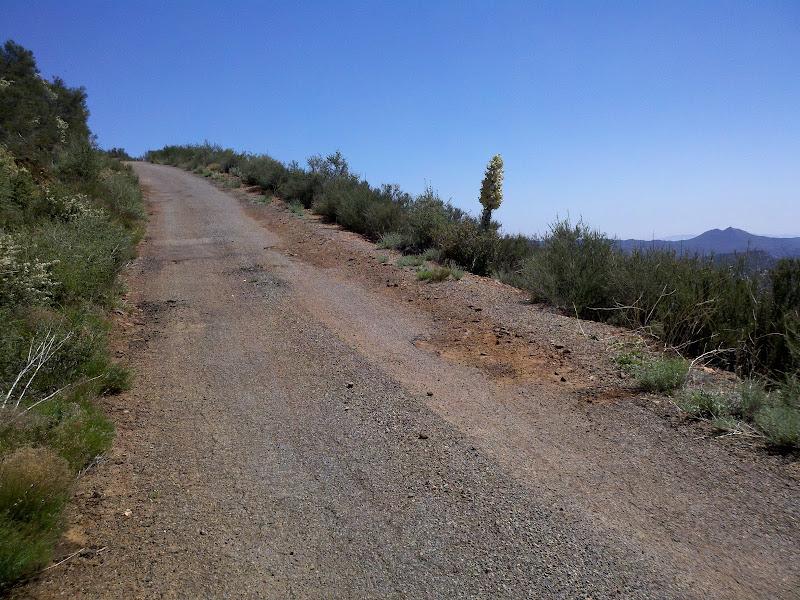 Mount Laguna Bicycle Classic • Pine Creek Road (After Gate)