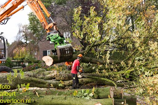 Bomen gekapt Museumlaan in overloon 20-10-2014 (31).jpg