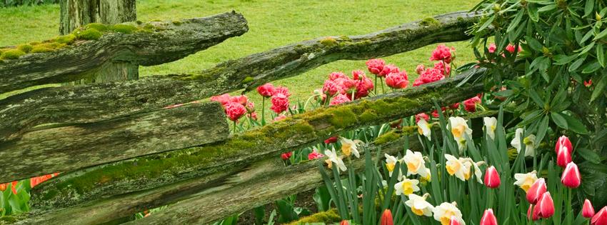Ảnh bìa hoa Đà Lạt đẹp cho Facebook