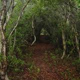 Sullivan's Island Coastal Forest