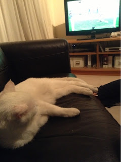 white cat on sofa watching TV football match