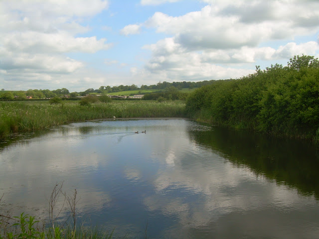A pond in Leicestershire