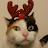 Misty Kibler avatar image