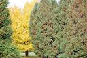 ősz I