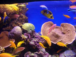 Экскурсия в Эйлат. Красное море. Коралловой риф. Гид в Израиле Светлана Фиалкова.
