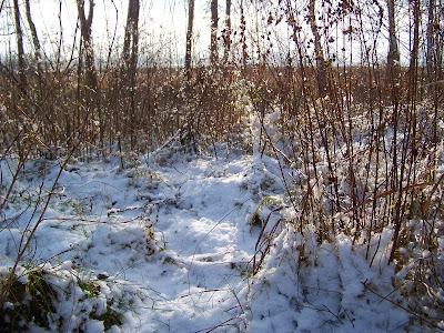 zima śnieg widoczki