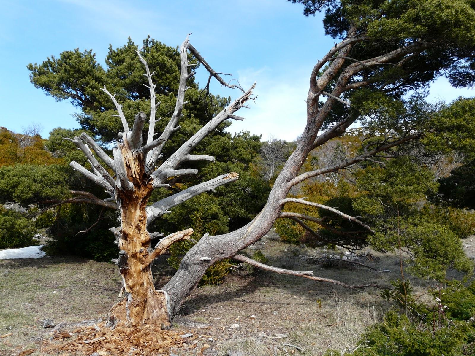 Les orogen ses rog nes d 39 eug ne mars 2011 - Comment couper un palmier mort ...