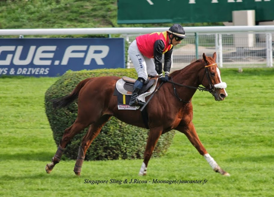 Photos Auteuil 2-11-2014 (48h de l'obstacle) IMG_5297