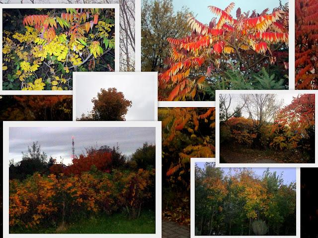 [Obrazek: jesiennnie.jpg]