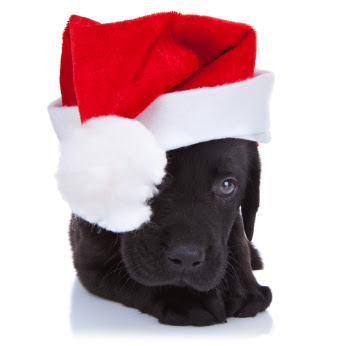 Christmas Clothing and Outfits For Your Dog This Festive Season