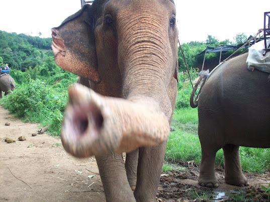 Elephant nose