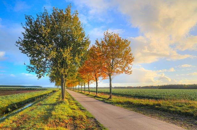 ảnh con đường tháng 8 mùa thu thật đẹp