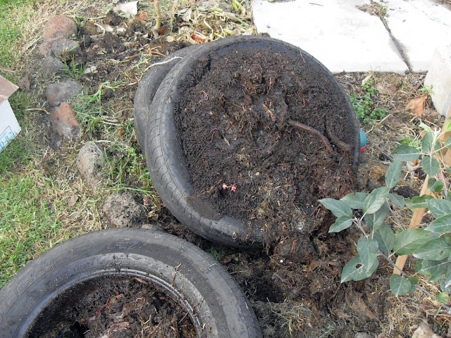 car tire worm farm