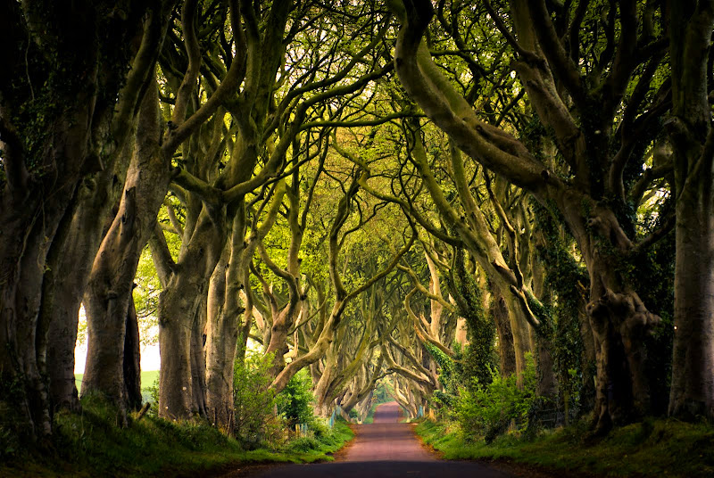 Irlandia Płn -- the Dark Hedges..