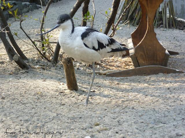 птицы новосибирского зоопарка