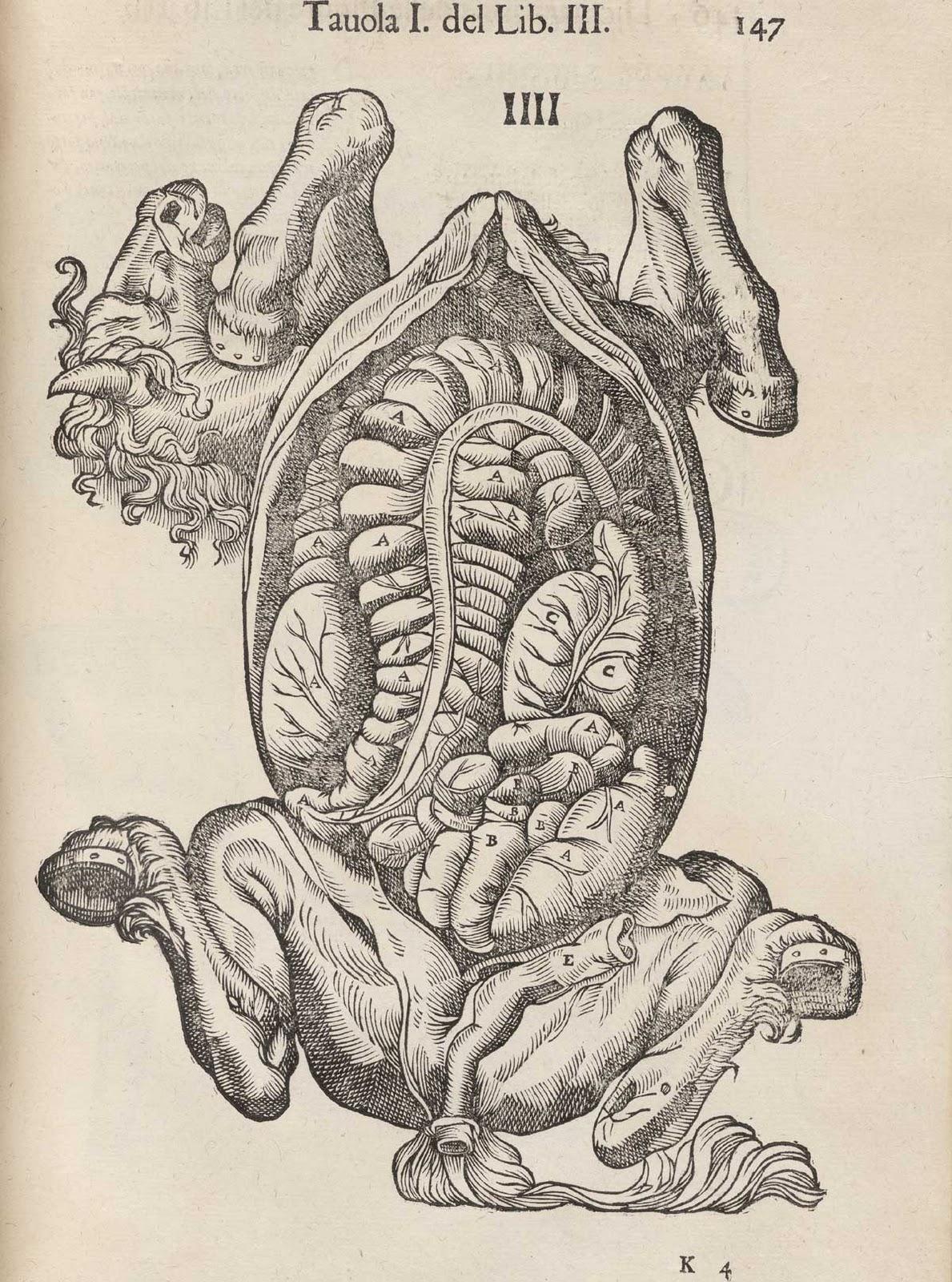 Anatomía de los Animales: febrero 2011