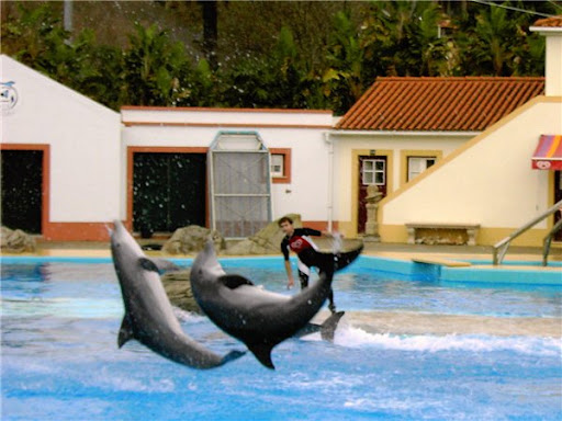Дельфинарий в Лиссабоне шоу дельфинов фото