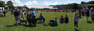 Setting up your dog show in Dorset - with dorsetdog . com