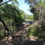 Henry Head Track near La Perouse (308963)