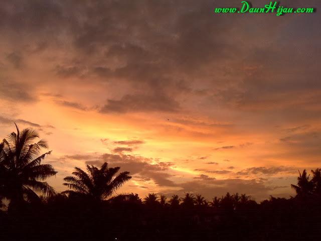 Daun Hijau dan matahari yang mulai tenggelam (5)