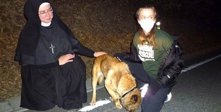 Nun Helps Animals in Disasters