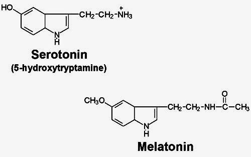 %252522melatonin-and-serotonin-03.jpg%25