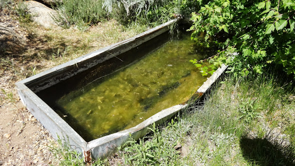 Cattle trough at Tunnel Spring --  Click to enlarge.